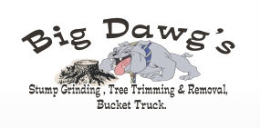 Big Dawgs Stump Grinding and Tree Removal