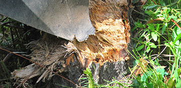 Stump Grinding in Eugene, OR