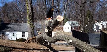 Tree Removal in Newport News, VA