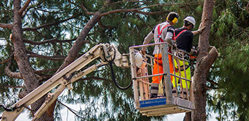 Tree Service in Cary, NC