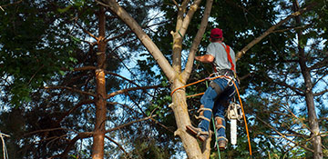 Tree Trimming in Cary, NC