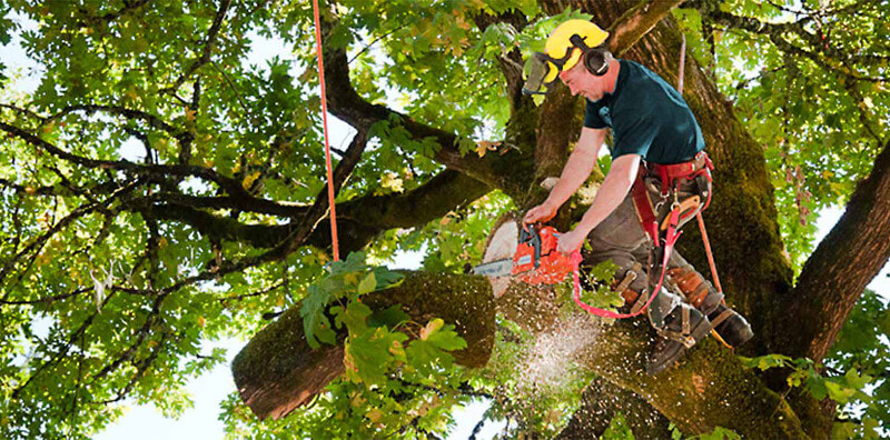 Huntington Beach Tree Service